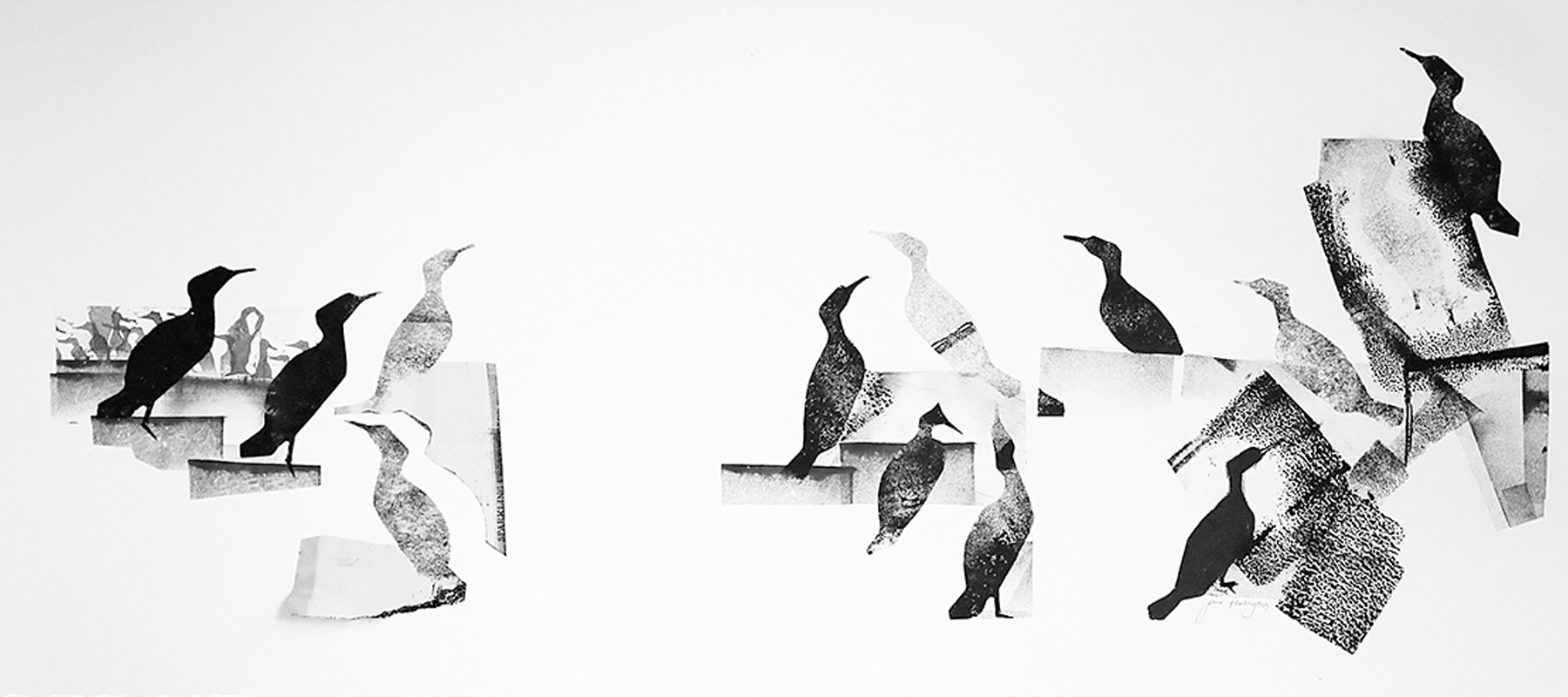Cormorants by - Jane Harlington - artist - Blue Pig Studio - Carloway - Isle of Lewis